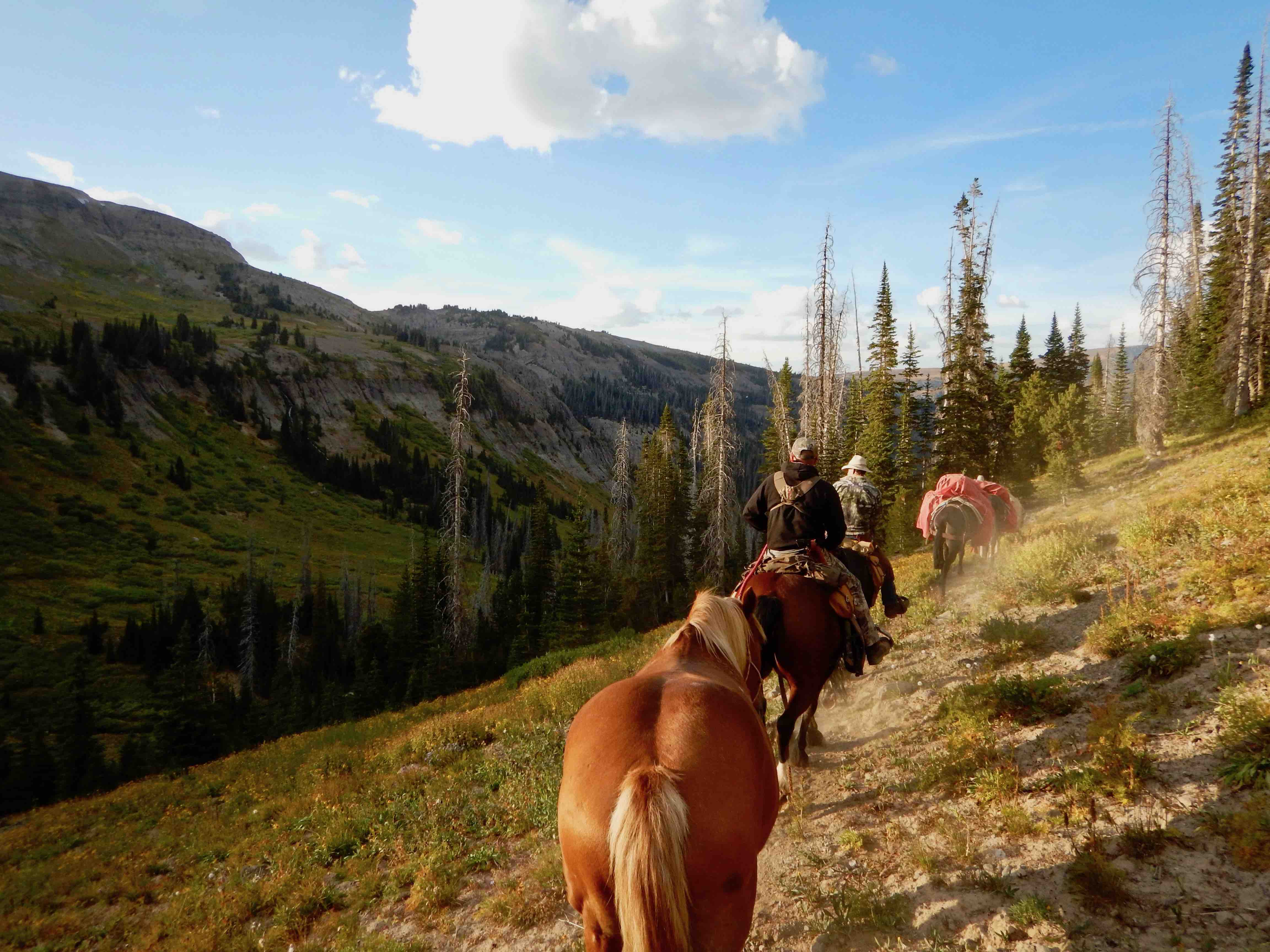 Yellowstone River Pack Trips