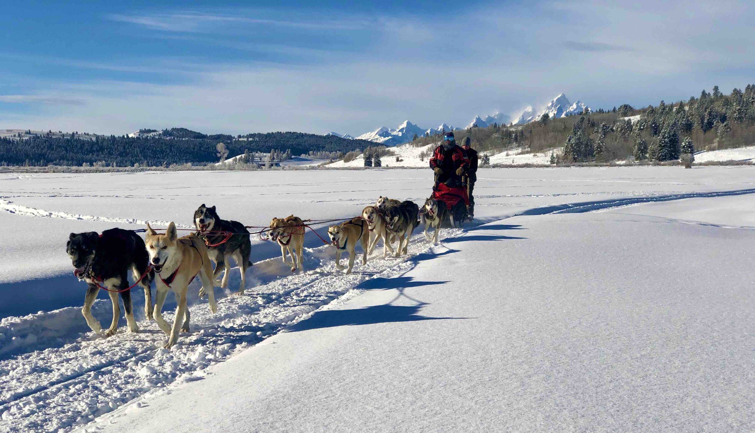 Snowmobile 1 – picture of dogsledding